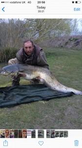 76.8 cat fish